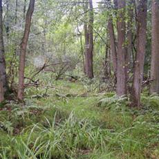 Neuer Klimaschutzwald in Neurhede