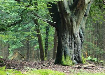 """Klimaschutzwald """"Für jeden Emsländer ein Baum"""""""