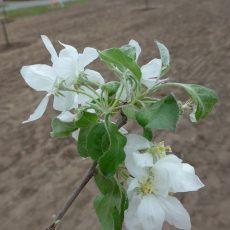 Tag des Baumes – 20 Obstbäume und Wildblumen für die Waldschule Leschede