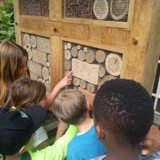 Schüler stellen Insektenhotel auf und legen Wildblumenwiese an