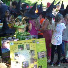 HOTSPOT-PROJEKT: Kinderstube für Fische, Amphibien und Insekten