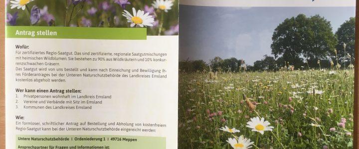 Neues Förderprogramm Wildblumen(wiesen)