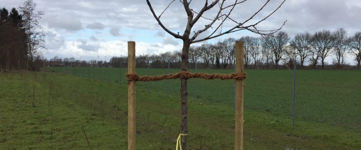 Bei Trauerfall – Bäume pflanzen
